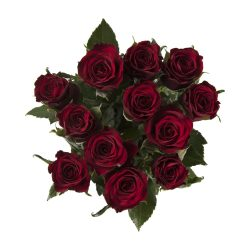 Roses RED 14 Stems