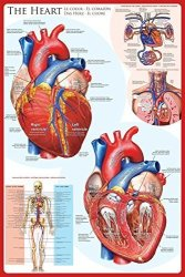 Eurographics Laminated The Heart Educational Chart Poster Print 24X36