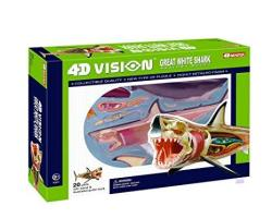 Vision 4D Great White Shark Anatomy Model