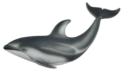 Pacific White-sided Dolphin Medium
