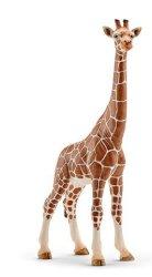 - Wild Life: Giraffe Female