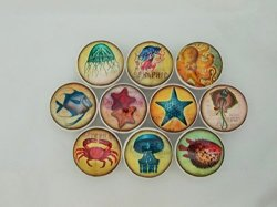 Twisted R Design Set Of 10 Colorful Sealife Cabinet Knobs