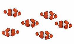 Safari Ltd. - Good Luck Minis - Clownfish - Set Of 10